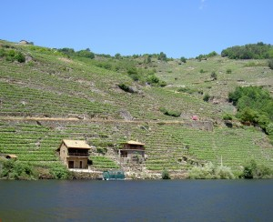 Growing grapes in the Ribeira Sacra on a staircase to the sky