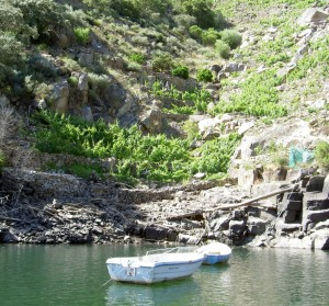 Some vineyards are only accessible from the river by boat.