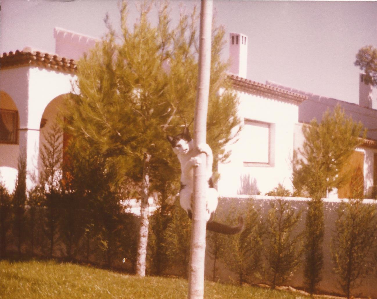 """""""The Winner Takes It All"""" – Miami Playa, Tarragona, Spain, 1981"""