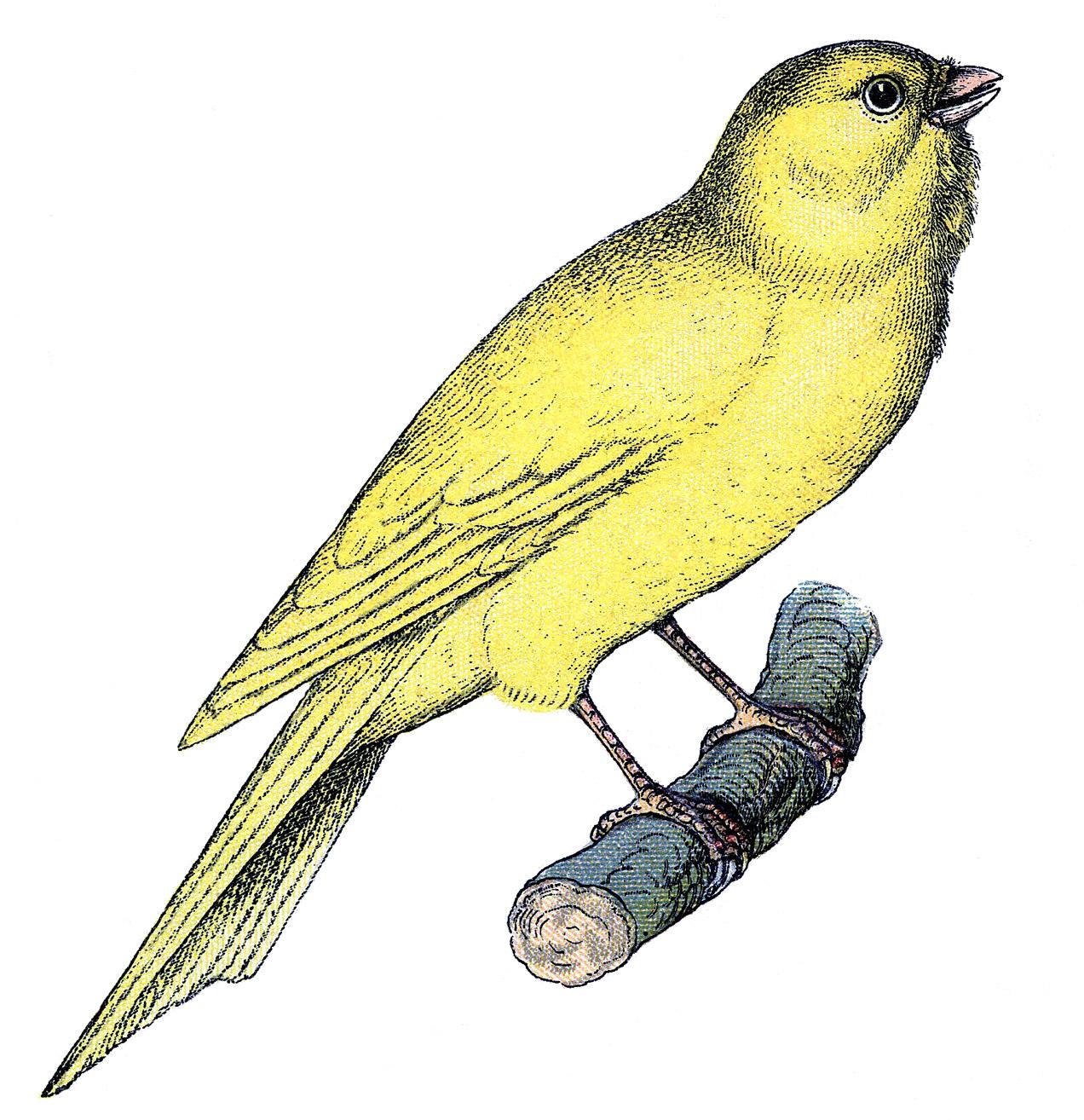 What's this about a Canary?! Lol. – El Puerto de Santa Maria, Cadiz, Spain, 1975