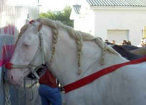 16. Ride a white horse